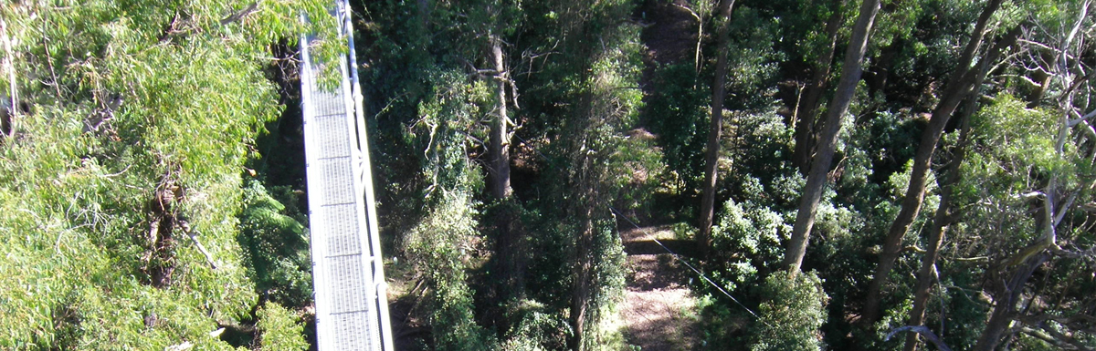See Australia from the Tree-Tops