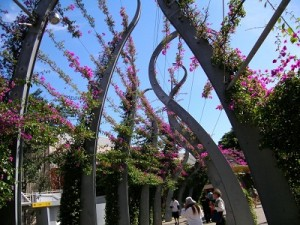 bouganvillea-walk-southbank-brisbane