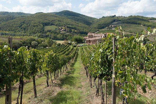 tuscany vineyard, travel, italy