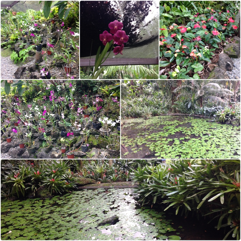 garden-of-the-sleeping-giant, orchids, travel, fiji