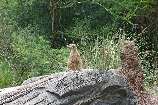 animal-kingdom,disneyworld,www.traveltripz.com, travel, USA