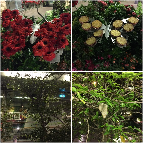 butterfly-house,changi-airport,travel, singapore