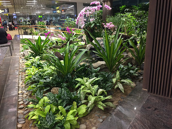 changi-airport, travel, singapore