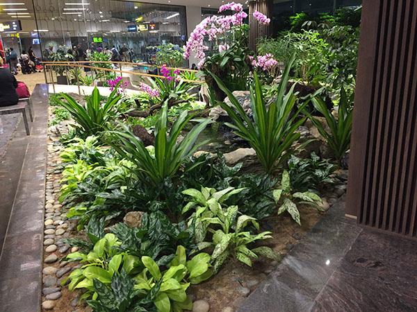 changi-airport, travel, singapore